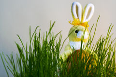 Easter Bunny with eggs lighted by sunlight Royalty Free Stock Images