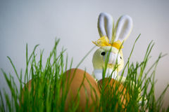 Easter Bunny with eggs lighted by sunlight Royalty Free Stock Image