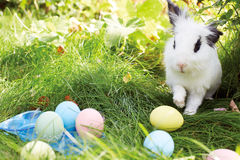 Easter bunny with eggs on a meadow in spring Stock Photos