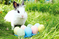 Easter bunny with eggs on a meadow in spring Stock Image