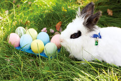 Easter bunny with eggs on a meadow in spring Royalty Free Stock Photos