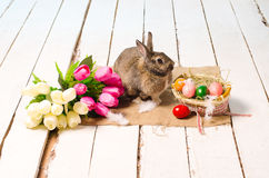 Easter bunny and eggs on wooden floor Stock Images