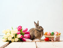 Easter bunny and eggs on wooden floor Royalty Free Stock Photo