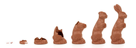 Easter Bunny Evolution stock images