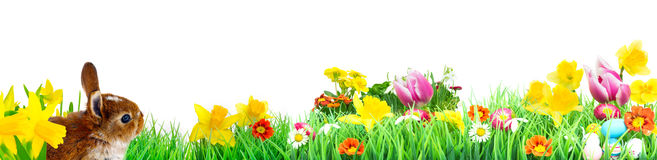 Easter bunny, Flower Meadow, isolated, Banner Stock Photo