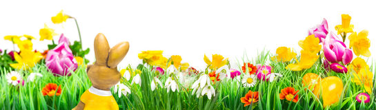 Easter bunny, Flower Meadow, isolated, Banner Stock Photos