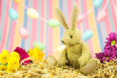 Easter bunny, fresh flowers, pastel egg and stripes background. Stock Photos