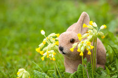 Easter bunny in the garden with cowslips (Primula veris) Stock Photo