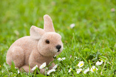 Easter bunny in the garden with daisies Royalty Free Stock Image