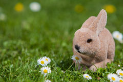 Easter bunny in the garden Stock Photos