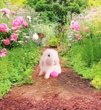 Easter bunny in the garden. Royalty Free Stock Image