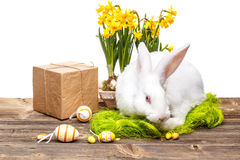 Easter bunny. With gift box and eggs Royalty Free Stock Images