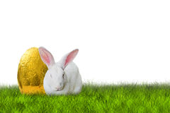 Easter bunny and golden egg. Easter bunny and golden Easter egg on white background Royalty Free Stock Image