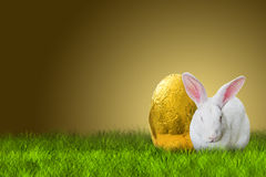 Easter bunny and golden egg. Easter bunny and golden Easter egg on white background Royalty Free Stock Photography