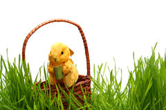 Easter bunny in the grass royalty free stock photography