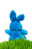Easter bunny and green grass Stock Image