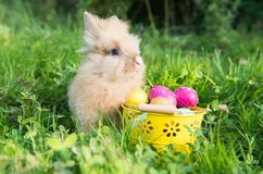 Easter bunny in green grass. In spring Stock Photo