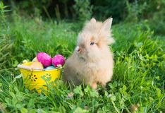 Easter bunny in green grass Royalty Free Stock Photography