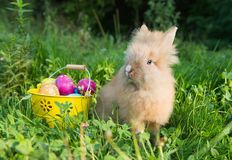 Easter bunny in green grass Stock Image