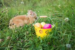 Easter bunny in green grass Stock Photo