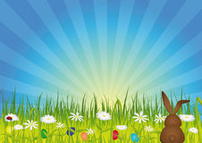 Easter bunny on green meadow. With easter eggs and flowers Royalty Free Stock Photo