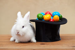Easter bunny guarding the colorful eggs Royalty Free Stock Images