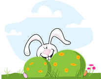Easter Bunny Hiding Royalty Free Stock Photo