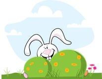 Easter Bunny Hiding Royalty Free Stock Photo