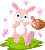 Easter Bunny Hiding Eggs Royalty Free Stock Photos