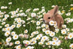 Easter bunny hiding in the garden Stock Photos