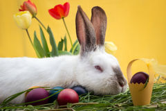 Easter bunny with holyday symbols Royalty Free Stock Images