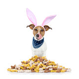 Easter bunny hungry dog Stock Photo