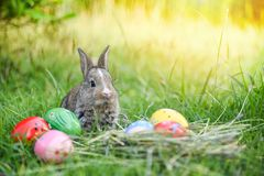 Easter bunny hunt easter egg on green grass nature background royalty free stock images