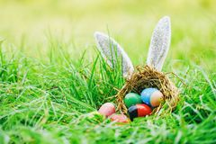 Easter bunny hunt easter eggs on green grass outdoor royalty free stock images