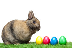 Easter Bunny In Meadow With Colorful Easter Eggs Royalty Free Stock Image