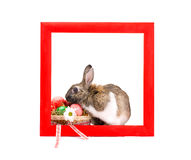 Easter bunny inside painted red wooden frame Stock Photos