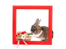 Easter bunny inside painted red wooden frame Royalty Free Stock Image