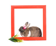Easter bunny inside painted red wooden frame Stock Photography