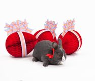 Easter bunny isolated on white Royalty Free Stock Photos