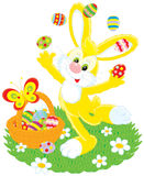 Easter Bunny juggles eggs. Vector clip-art of Easter Bunny juggling colored eggs on a green lawn with camomiles, near him is a basket of colorfully painted Royalty Free Stock Photos