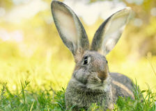 Easter bunny jumping in a sunny spring garden Stock Photo