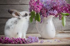 Easter bunny with lilac. On wooden background stock photography
