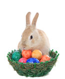 Easter bunny looking for easter eggs stock images