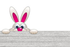 Easter bunny looking by the wooden fence Royalty Free Stock Image