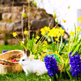 Easter bunny on meadow with basket and eggs Stock Photography