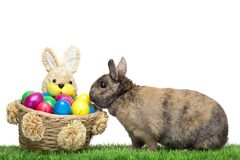 Easter bunny in meadow with colorful Easter egg Royalty Free Stock Image