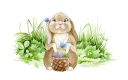Easter bunny on the meadow watercolor illustration. Funny cute little rabbit on the green grass with a basket full of eggs. Tradit