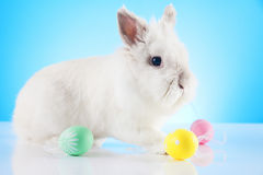 Easter Bunny. Easter motive. White Easter Bunny Stock Photos