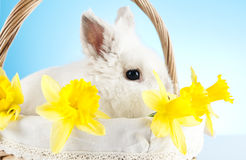 Easter bunny. Easter motive. White Easter Bunny Stock Photo
