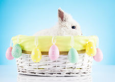 Easter bunny. Easter motive. White Easter Bunny Royalty Free Stock Photography